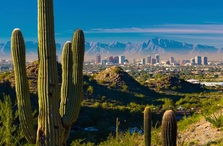 Phoenix skyline and cactuses